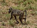 Tierbilder aus Afrika vom Nemter Gerhardt Kuhnath_10