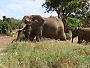 Tierbilder aus Afrika vom Nemter Gerhardt Kuhnath_11