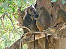 Tierbilder aus Afrika vom Nemter Gerhardt Kuhnath_12