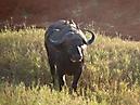 Tierbilder aus Afrika vom Nemter Gerhardt Kuhnath_13