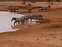 Tierbilder aus Afrika vom Nemter Gerhardt Kuhnath_4