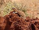 Tierbilder aus Afrika vom Nemter Gerhardt Kuhnath_6