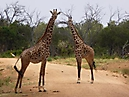 Tierbilder aus Afrika vom Nemter Gerhardt Kuhnath_7