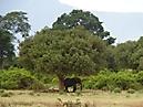 Tierbilder aus Afrika vom Nemter Gerhardt Kuhnath_8